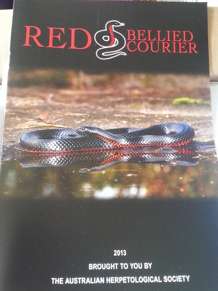 Red Bellied Courier - 2014 Edition