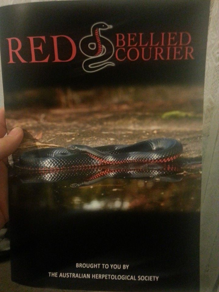Red Bellied Courier - Coloured Annual Edition